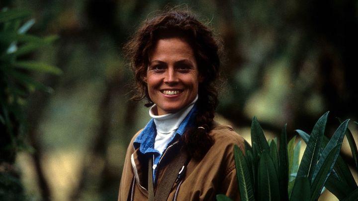 Una scena tratta dal film Gorilla nella nebbia