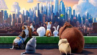 Film, Pets - Vita da animali