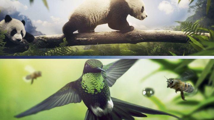 Una scena tratta dal film Earth - Un giorno straordinario