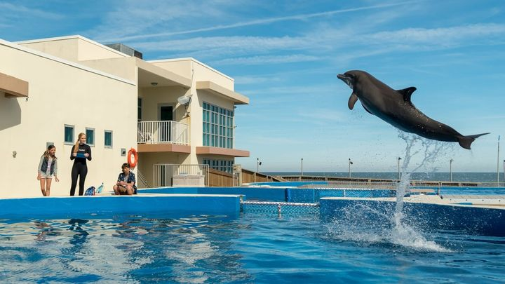 Una scena tratta dal film Bernie il delfino