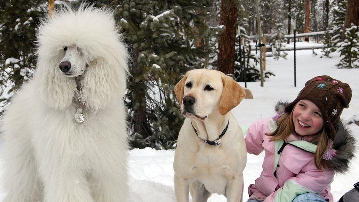 Una scena tratta dal film Mamma che Natale da cani!